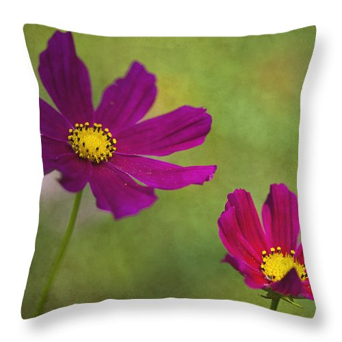 Flower Throw Pillow featuring the photograph Cosmos by Amy Jackson