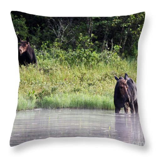 Moose Throw Pillow featuring the photograph Two Moose by Lloyd Alexander