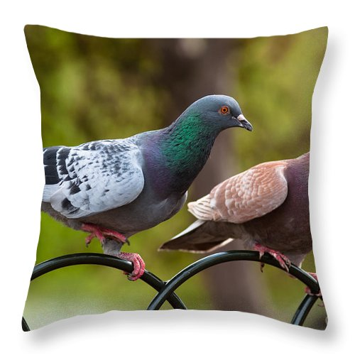 England Throw Pillow featuring the photograph Two Pigeons by Andrew Michael