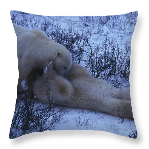 Color Image Throw Pillow featuring the photograph Two Polar Bears Wrestle In The Snow by Nick Norman