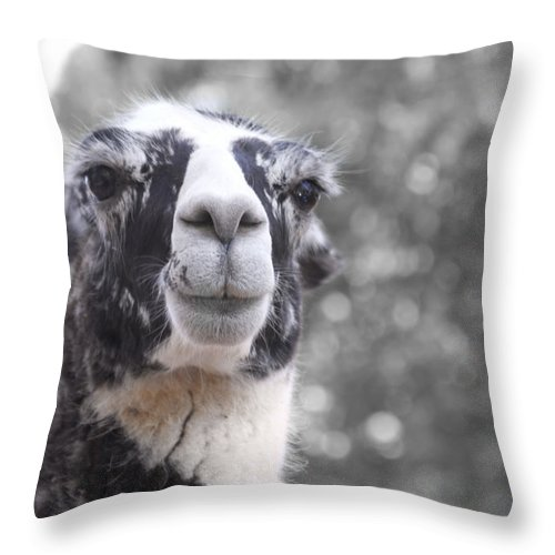 Lama Throw Pillow featuring the photograph Two-toned by Douglas Barnard