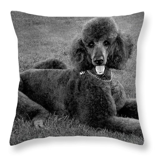 Throw Pillow featuring the photograph Tyler In Black And White by Burney Lieberman
