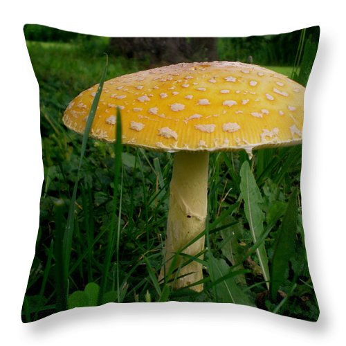 Mushroom Throw Pillow featuring the photograph Umbrellaroom by Donald Black
