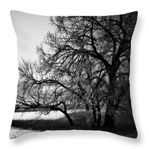 Black And White World Photographer Throw Pillow featuring the photograph Under The Waiting Tree by The Artist Project