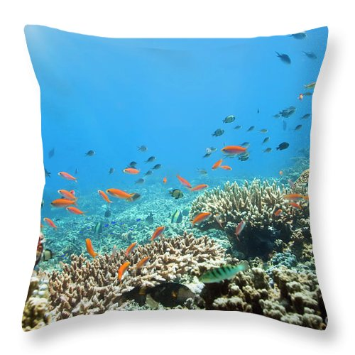 Fishes Throw Pillow featuring the photograph Underwater World by MotHaiBaPhoto Prints