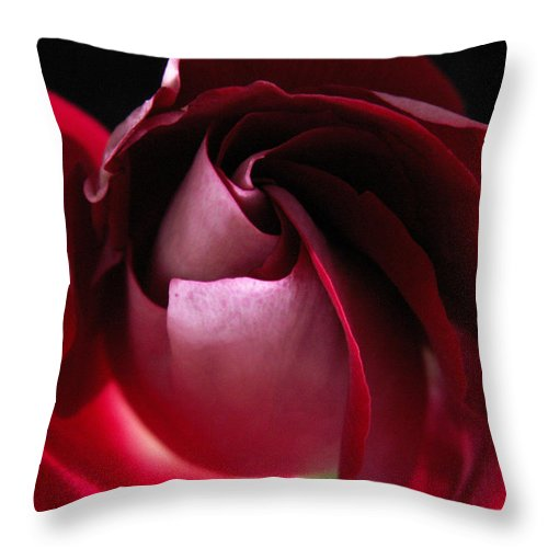 Rose Throw Pillow featuring the photograph Unfolding Rose by Nancy Griswold