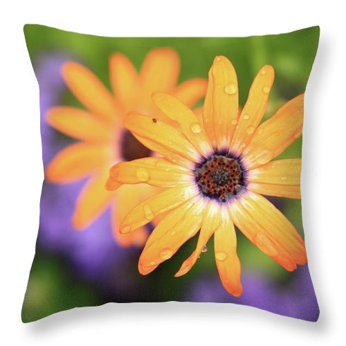 Flowers Throw Pillow featuring the photograph Untitled by Rick Berk