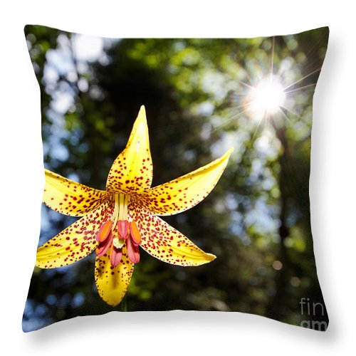 Flower Throw Pillow featuring the photograph Up And Under There Was Beauty by Lloyd Alexander