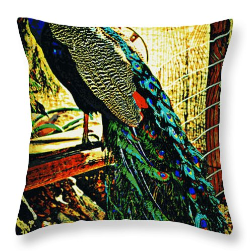 Peacock Throw Pillow featuring the photograph Vanity by Diane montana Jansson