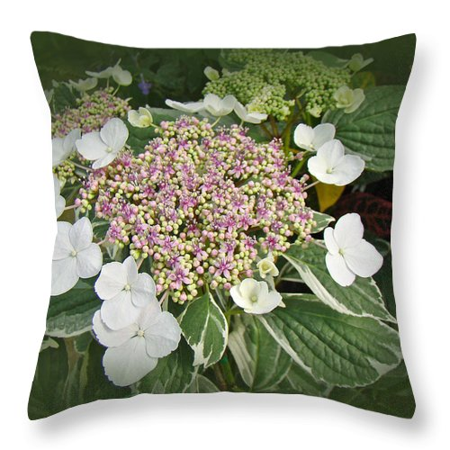 Variegated Lace Cap Hydrangea Pink And White Throw Pillow For Sale Simple Hydrangea Decorative Pillows