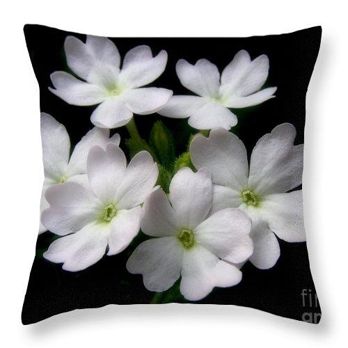 Verbena Throw Pillow featuring the photograph Verbena by Angie Rea