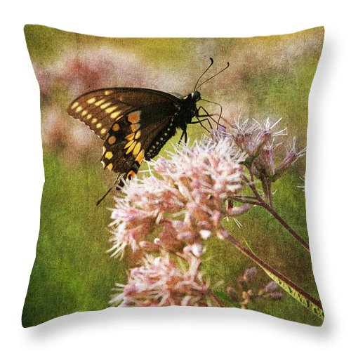 Butterfly Throw Pillow featuring the photograph Victuals II by Dale Kincaid