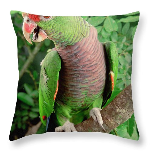 Mp Throw Pillow featuring the photograph Vinaceous-breasted Parrot Amazona by Claus Meyer