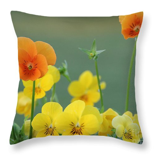 Flowers Throw Pillow featuring the photograph Violas by Jack Schultz