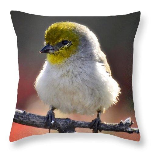 Virden Throw Pillow featuring the photograph Virden by Saija Lehtonen