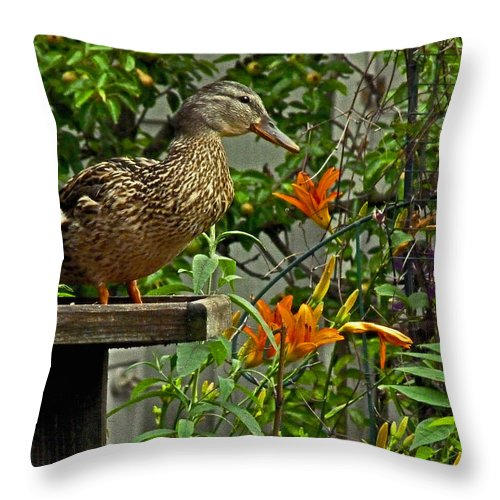 Duck Throw Pillow featuring the photograph Visitor To The Feeder by William Fields
