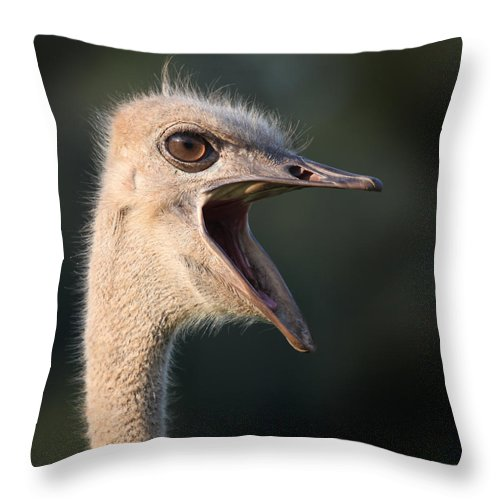 Ostrich Throw Pillow featuring the photograph W H A T by Joseph G Holland