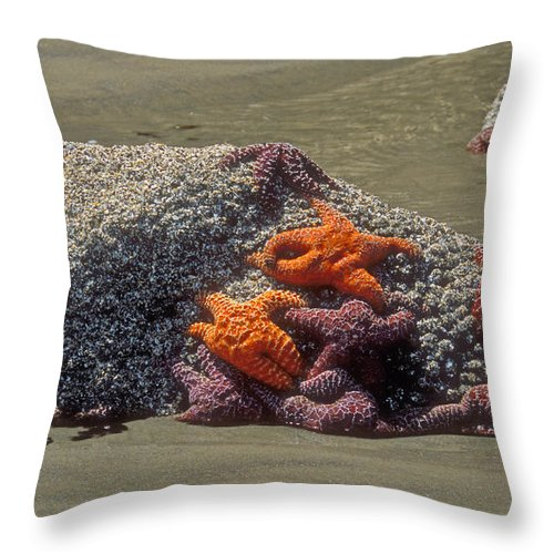 Starfish Marine Life Throw Pillow featuring the photograph Waiting For The Tide by Sandra Bronstein