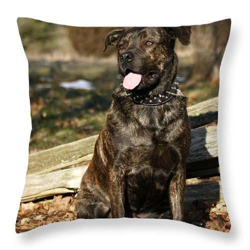 Waiting For You Throw Pillow featuring the photograph Waiting For You by Inspired Nature Photography Fine Art Photography