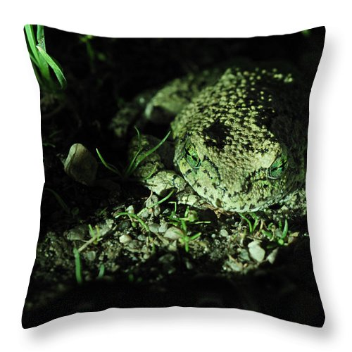 Nature Throw Pillow featuring the photograph Waiting by Susan Capuano