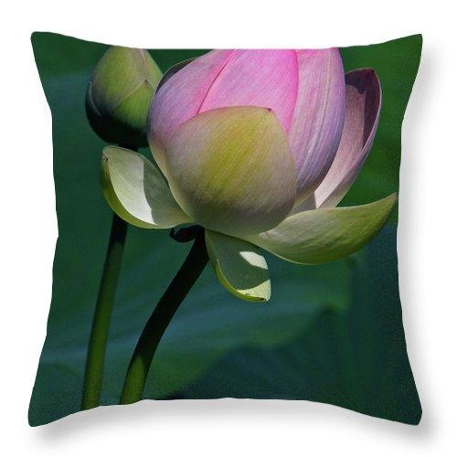 Lotus Throw Pillow featuring the photograph Wanna Kiss by Byron Varvarigos