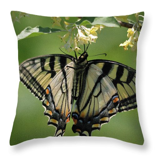 Nature Throw Pillow featuring the photograph Warpaint by Susan Capuano