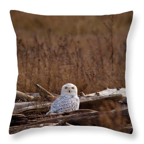 Owl Throw Pillow featuring the photograph Watcher by Karen Ulvestad