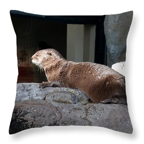 Animal Throw Pillow featuring the photograph Watching Everybody by Donna Brown