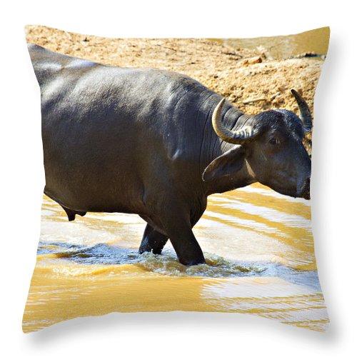Water Buffalo Throw Pillow featuring the photograph Water Buffalo by Douglas Barnard