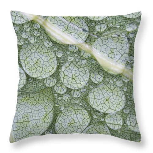 Mp Throw Pillow featuring the photograph Water Droplets On Leaf, Annapolis by Scott Leslie