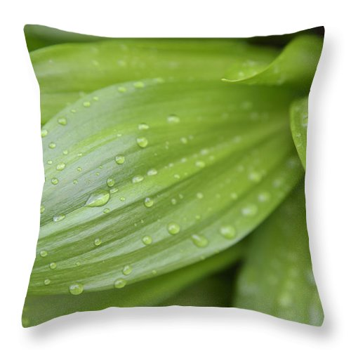 Waterdrops Throw Pillow featuring the photograph Water Drops On Green Leaf by Matthias Hauser