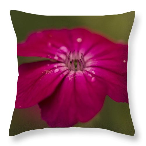 Lambs Ear Throw Pillow featuring the photograph Water Drops On Lambs Ear by Mark Michel