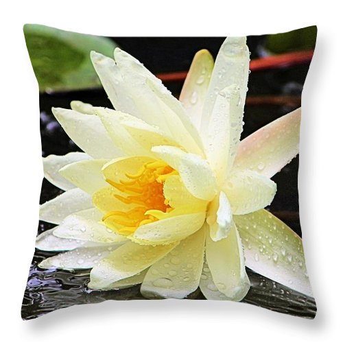 Water Lily Throw Pillow featuring the photograph Water Lily In White by Elizabeth Budd