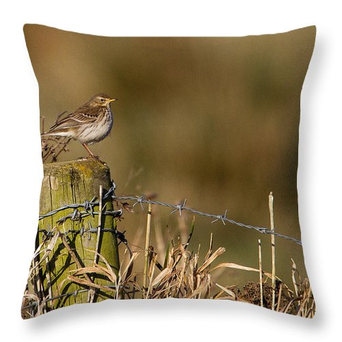 Water Pipit.pipit Throw Pillow featuring the photograph Water Pipit On Post by Bob Kemp