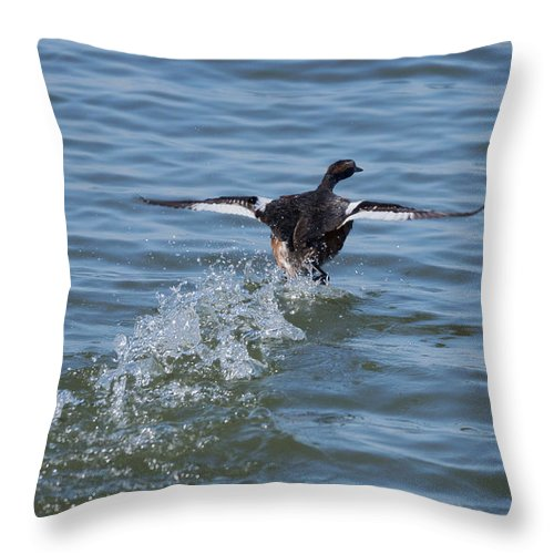 Grebe Throw Pillow featuring the photograph Water Polo by Lori Tordsen
