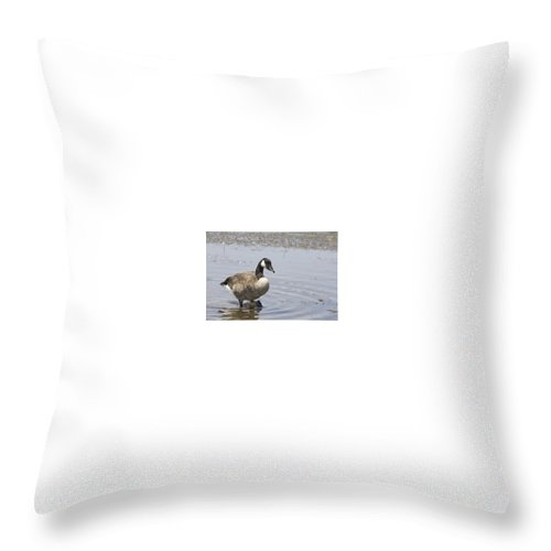 Canadian Goose Throw Pillow featuring the photograph Water Wading by Douglas Barnard