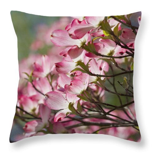 Pink Dogwood Throw Pillow featuring the photograph Waves Of Pink Light by Kathy Clark