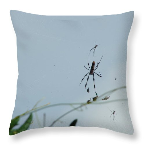 Nature Throw Pillow featuring the photograph Web Browsing by Peggy King