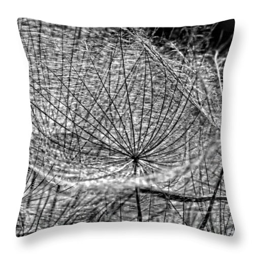 Asteraceae Throw Pillow featuring the photograph Weed Wandering Monochrome by Steve Harrington