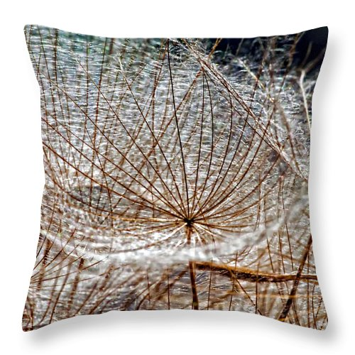 Asteraceae Throw Pillow featuring the photograph Weed Wandering by Steve Harrington