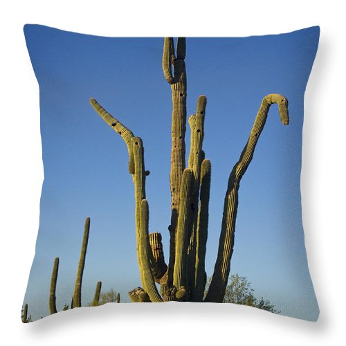Weird Throw Pillow featuring the photograph Weird Giant Saguaro Cactus With Blue Sky by James BO Insogna