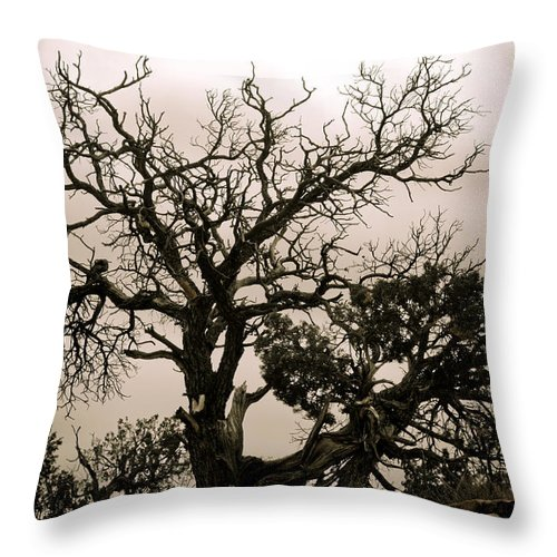 Nature Throw Pillow featuring the photograph Western Winter Tree by Marilyn Hunt