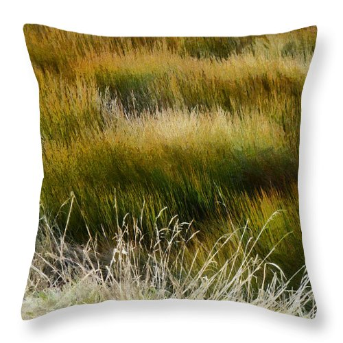 Wet And Dry Throw Pillow featuring the photograph Wet And Dry by Steve Taylor