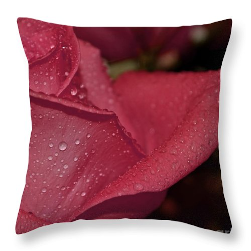 Botanical Throw Pillow featuring the photograph Wet Pink Rose Macro by Debbie Portwood