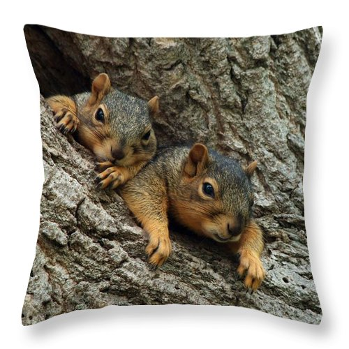 Squirrel Throw Pillow featuring the photograph What A Day by Lori Tordsen