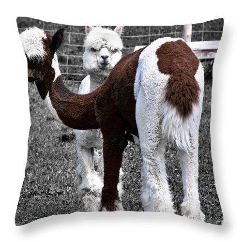 Llamas Throw Pillow featuring the photograph What Are You Looking At by Burney Lieberman
