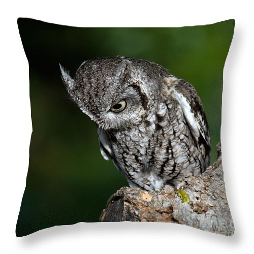 Owl Throw Pillow featuring the photograph What? by Lisa Porier
