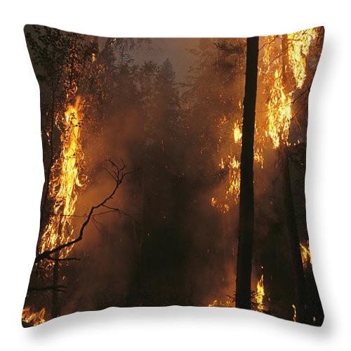Fires Throw Pillow featuring the photograph When Flames Crown Into Treetops by Mark Thiessen