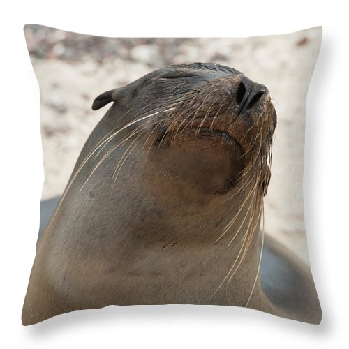 Brown Throw Pillow featuring the photograph Whiskers On The Face Of A Fur Seal by Keith Levit