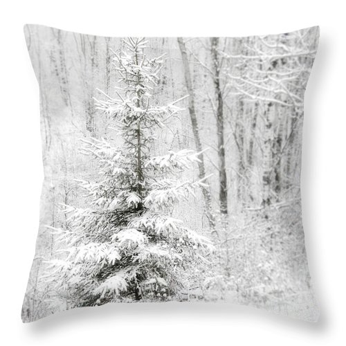 White Throw Pillow featuring the photograph Whispers The Snow by Angie Rea